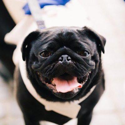 Beka & Con Wedding Dog